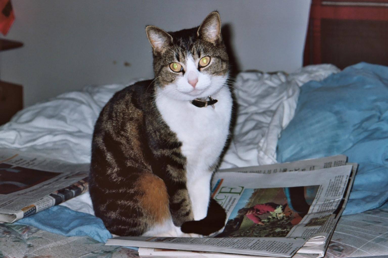 Name:  Lady G. (Jan. 20, 2009) (4).jpg Views: 231 Size:  138.8 KB