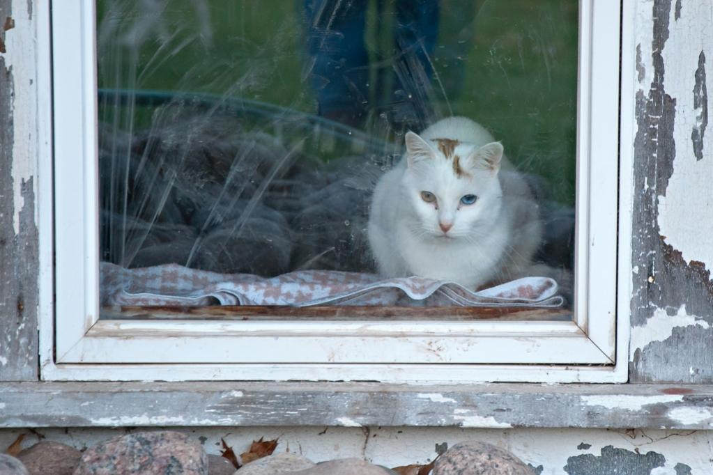 Name:  JD at the window 5-4-19.jpg Views: 180 Size:  91.0 KB