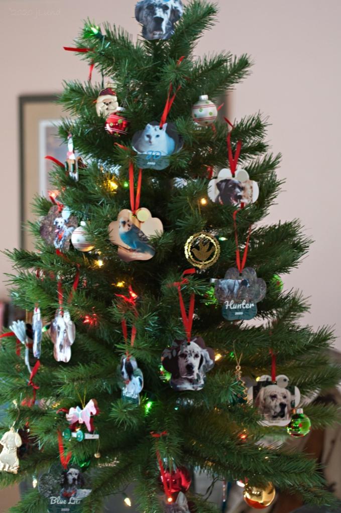 Name:  The 2020 Christmas tree 12-14-20 A.jpg Views: 44 Size:  108.2 KB