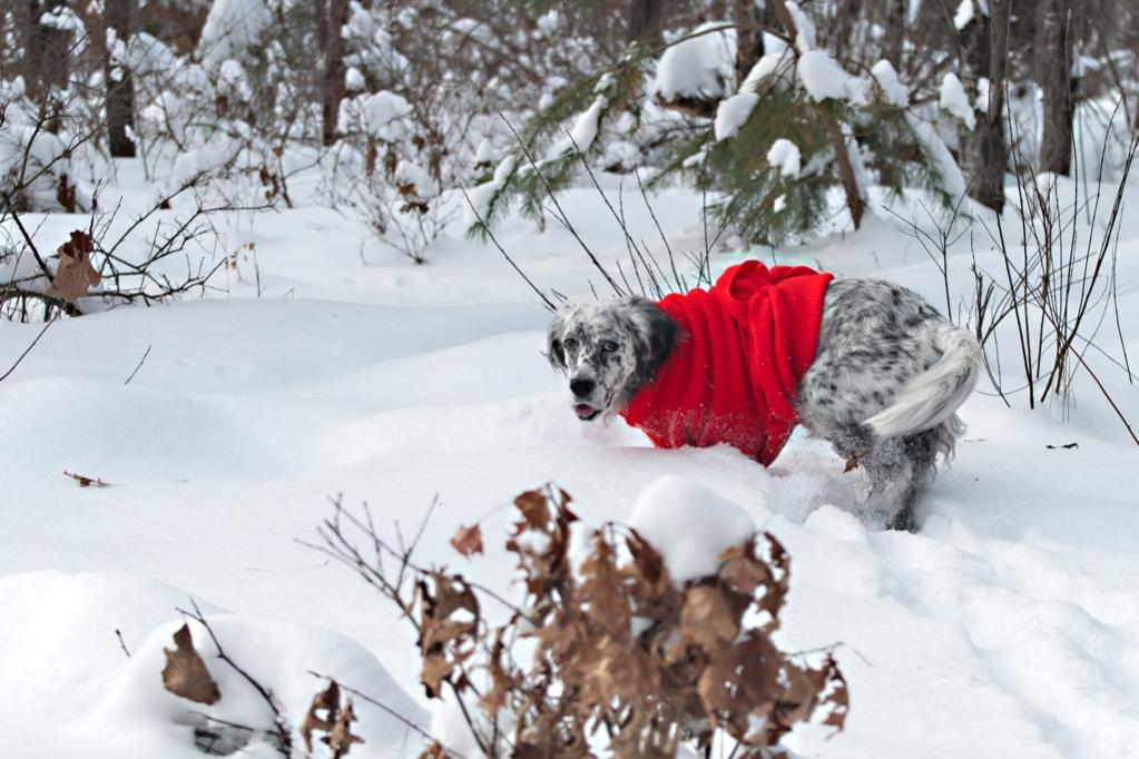 Name:  Grace in deep snow 12-15-19 A.jpg Views: 40 Size:  100.7 KB