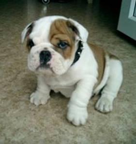 Name:  Boxer.jpg Views: 571 Size:  11.3 KB