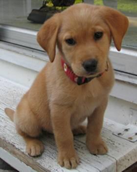Name:  puppy.jpg Views: 577 Size:  13.0 KB