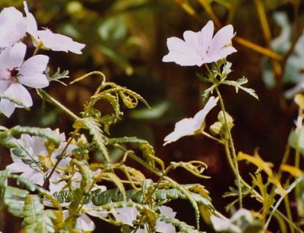 Name:  Well garden--mystery flower 7-9-08.jpg Views: 194 Size:  31.3 KB