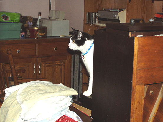 Name:  SHAWNNNEY KEEPING AN EYE OUT FOR CATS.jpg Views: 113 Size:  56.4 KB