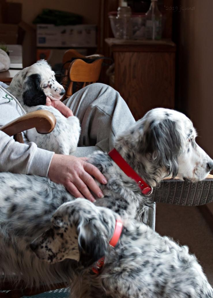 Name:  Lili looking at her new family 1-13-19.jpg Views: 55 Size:  88.0 KB