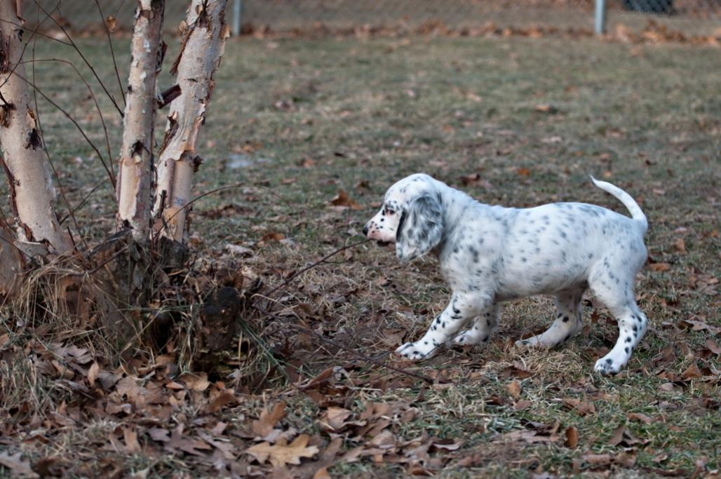 Name:  Helping trim the sucker shoots in the yard 1-13-19.jpg Views: 58 Size:  126.7 KB