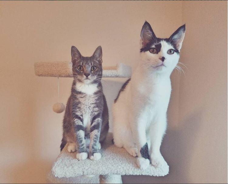Name:  SweetDee&MooMoo.JPG Views: 1370 Size:  50.1 KB