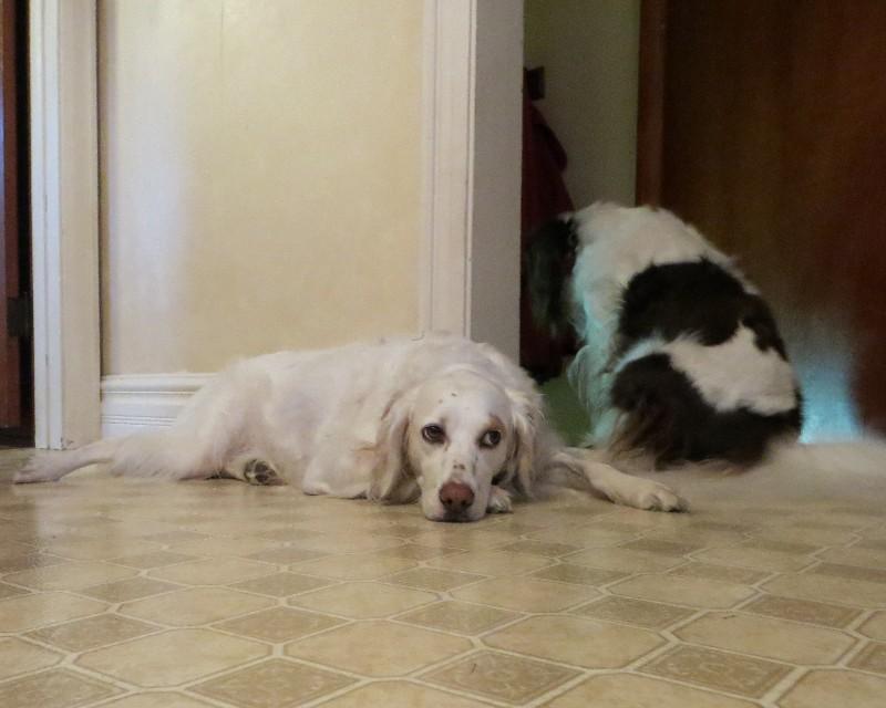 Name:  Mollie & Gryphon.JPG Views: 87 Size:  98.2 KB