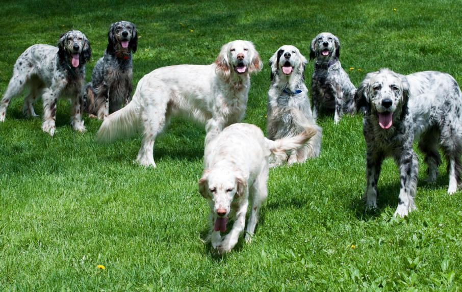 Name:  Macie receiving birthday wishes from the Pack 5-22-11.jpg Views: 137 Size:  138.1 KB