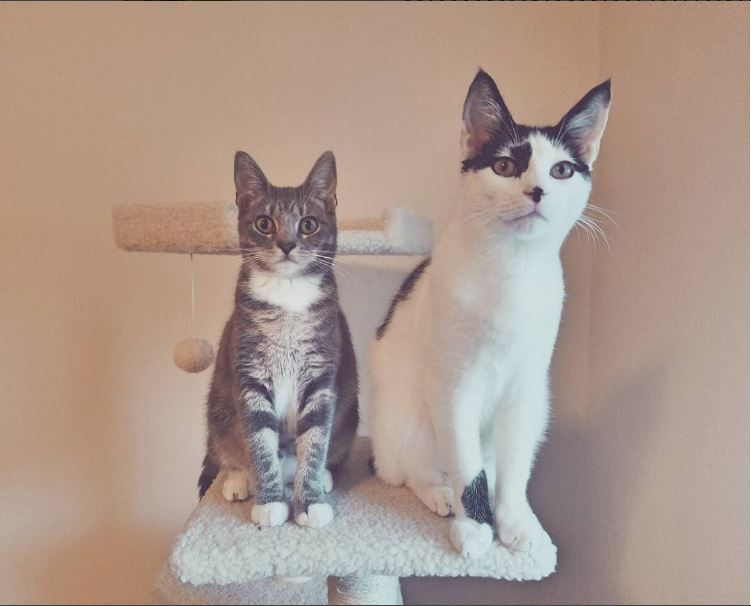 Name:  SweetDee&MooMoo.JPG Views: 1273 Size:  50.1 KB