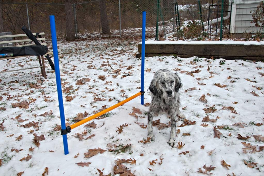 Name:  Grace at the hurdle 11-8-19.jpg Views: 45 Size:  143.0 KB
