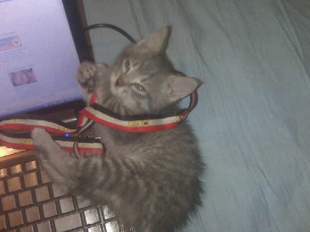 Name:  Kitten2.jpg Views: 180 Size:  24.0 KB