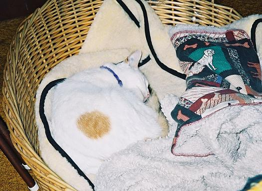 Name:  missy basket.jpg Views: 233 Size:  53.1 KB