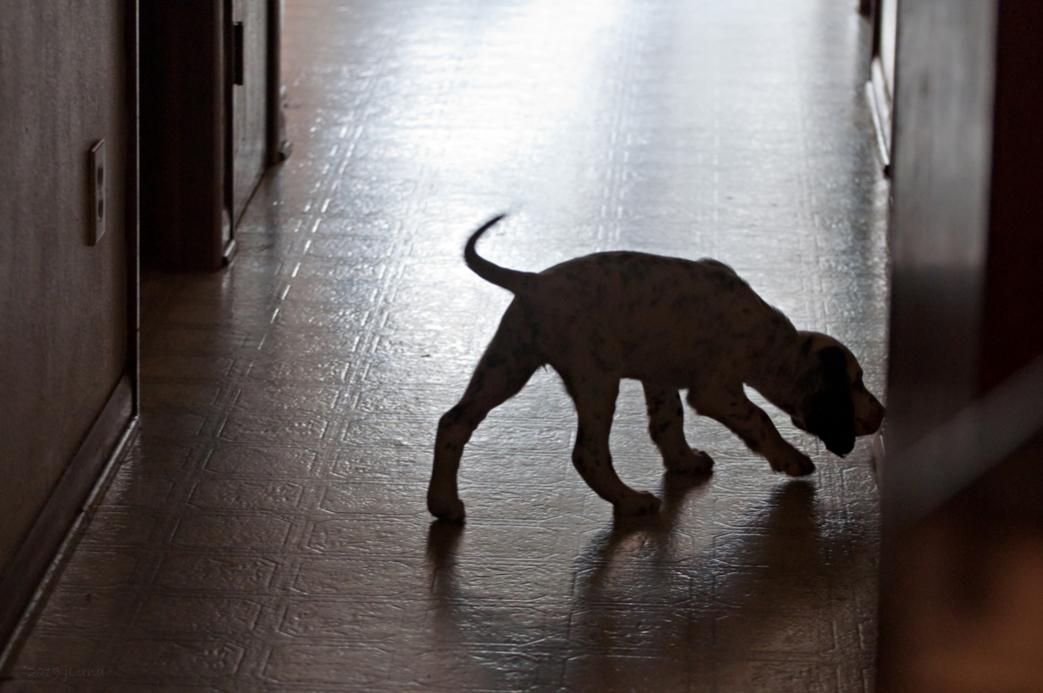 Name:  Puppy in the hall 1-13-19.jpg Views: 115 Size:  74.8 KB