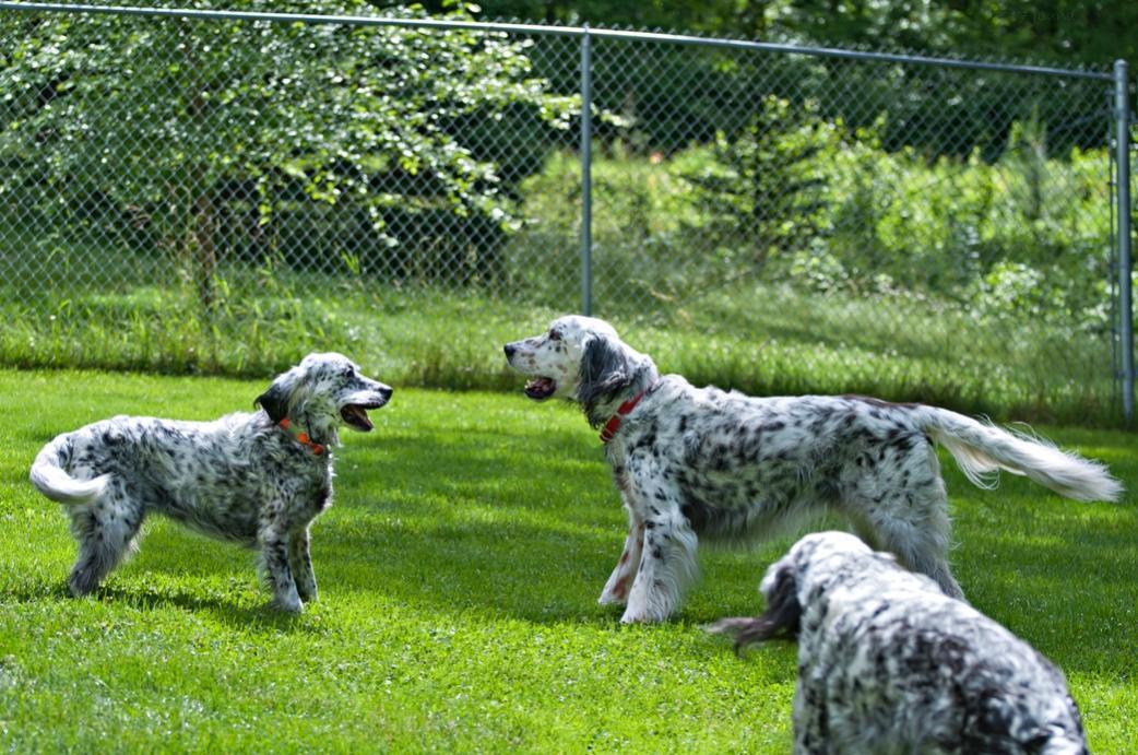 Name:  Brier and Grace wrasslin 6-26-17 K.jpg Views: 46 Size:  154.0 KB