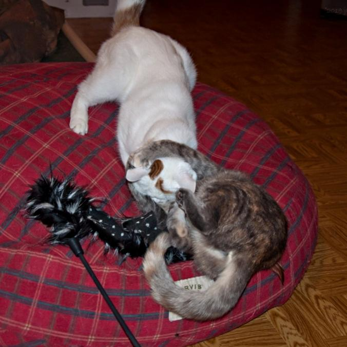 Name:  A tackle and wrestle 9-13-19 pets.jpg Views: 150 Size:  57.7 KB