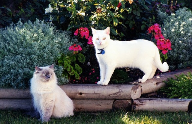 Name:  Snowball and Puddles.jpg Views: 291 Size:  112.3 KB