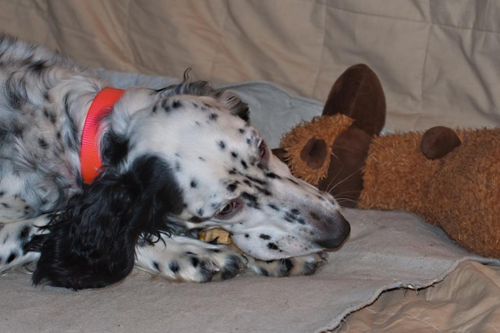 Name:  Sharing a birthday chew with her Big Butt Moose 11-16-19.jpg Views: 171 Size:  74.7 KB