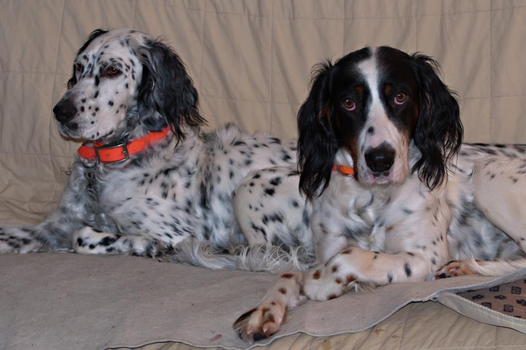 Name:  Lili and Hunter on the futon 2-29-20 B.jpg Views: 408 Size:  78.1 KB