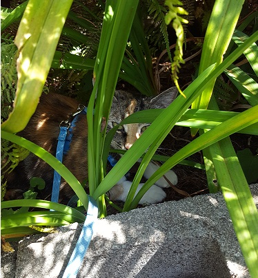 Name:  Lilly ferns.jpg Views: 65 Size:  112.6 KB