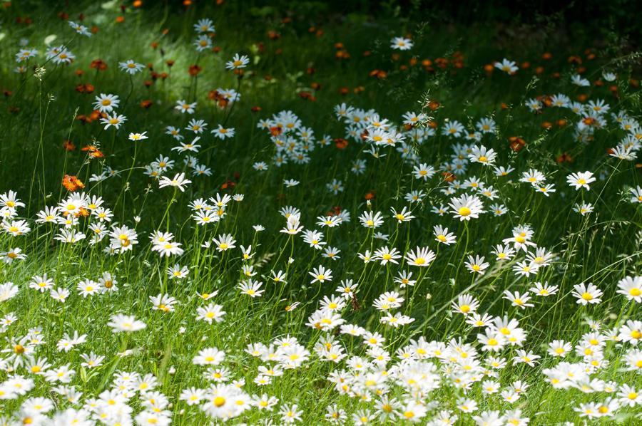 Name:  Front lawn 6-17-11 A.jpg Views: 522 Size:  145.8 KB