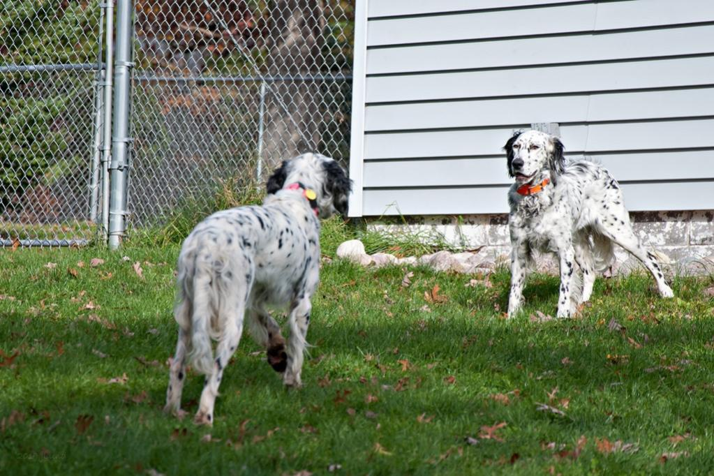 Name:  Lili and Colbi face-off 10-23-19.jpg Views: 111 Size:  141.7 KB