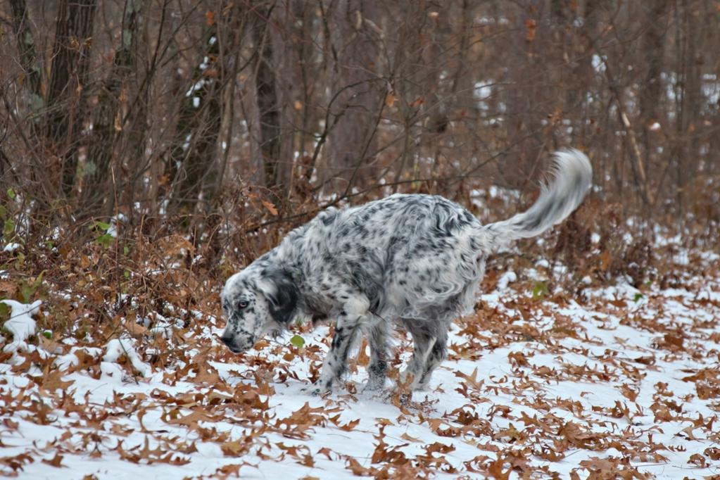 Name:  Grace exploring on the way back to the Wilderness Cabin 11-8-19 B.jpg