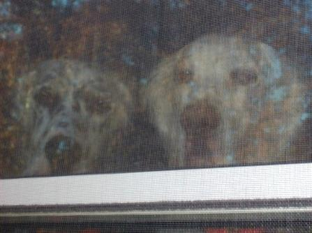 Name:  Brier and Ember at the window 10-11-08.jpg Views: 100 Size:  24.0 KB