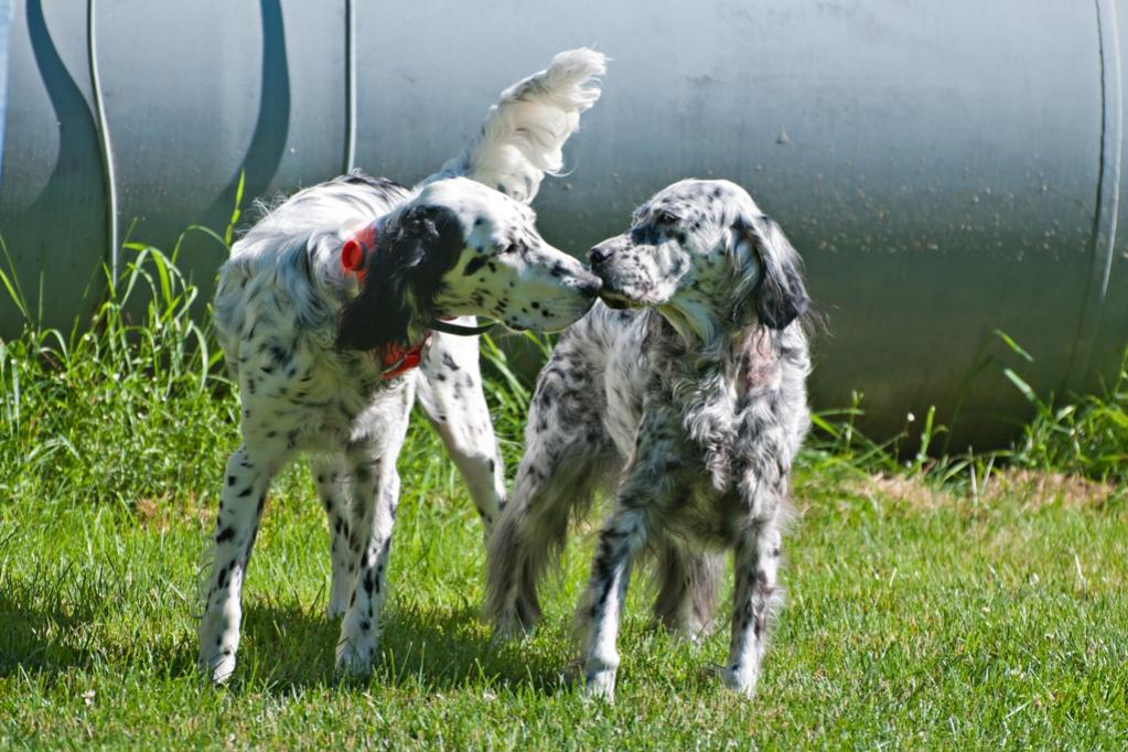 Name:  Lili and Grace in the big yard 7-11-19 A.jpg Views: 972 Size:  123.4 KB