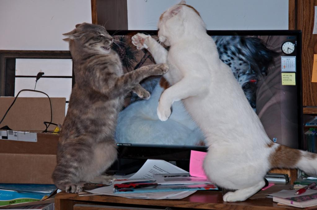 Name:  Boxing on the computer desk 9-23-19.jpg Views: 1738 Size:  72.9 KB