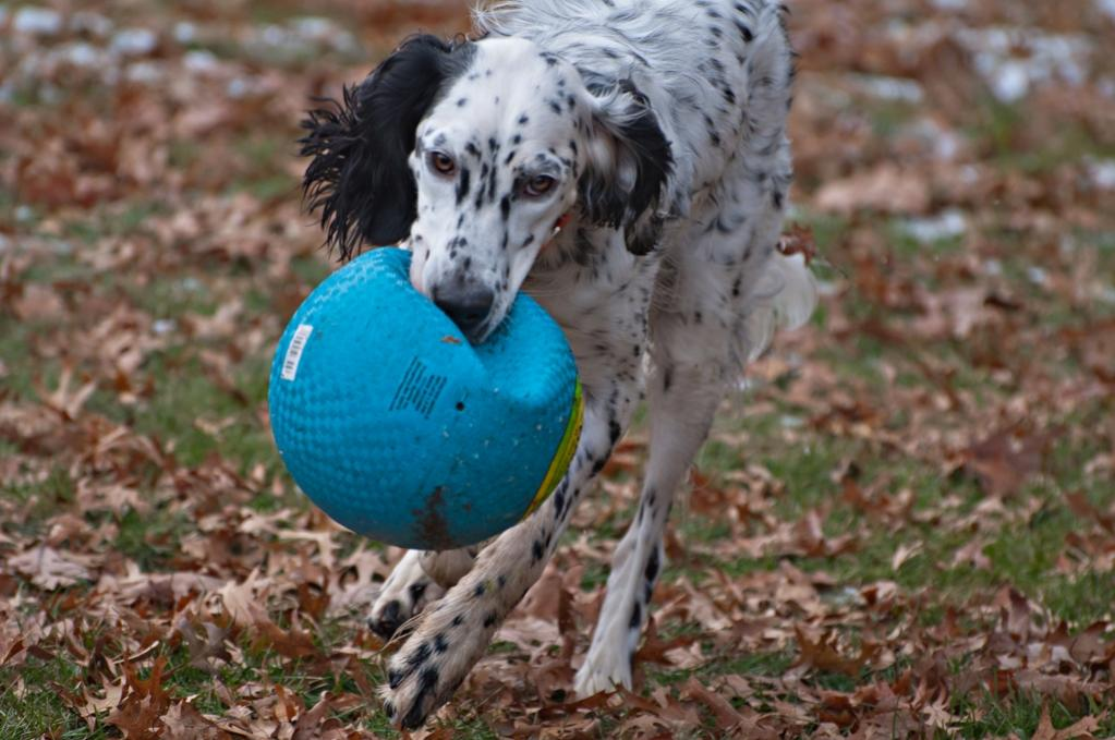 Name:  Slightly deflated balls are easier to run with! 11-16-19 G.jpg Views: 50 Size:  95.2 KB