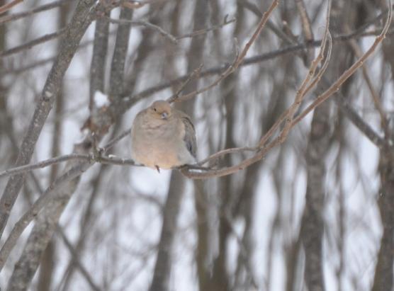 Name:  dove.jpg Views: 402 Size:  28.7 KB