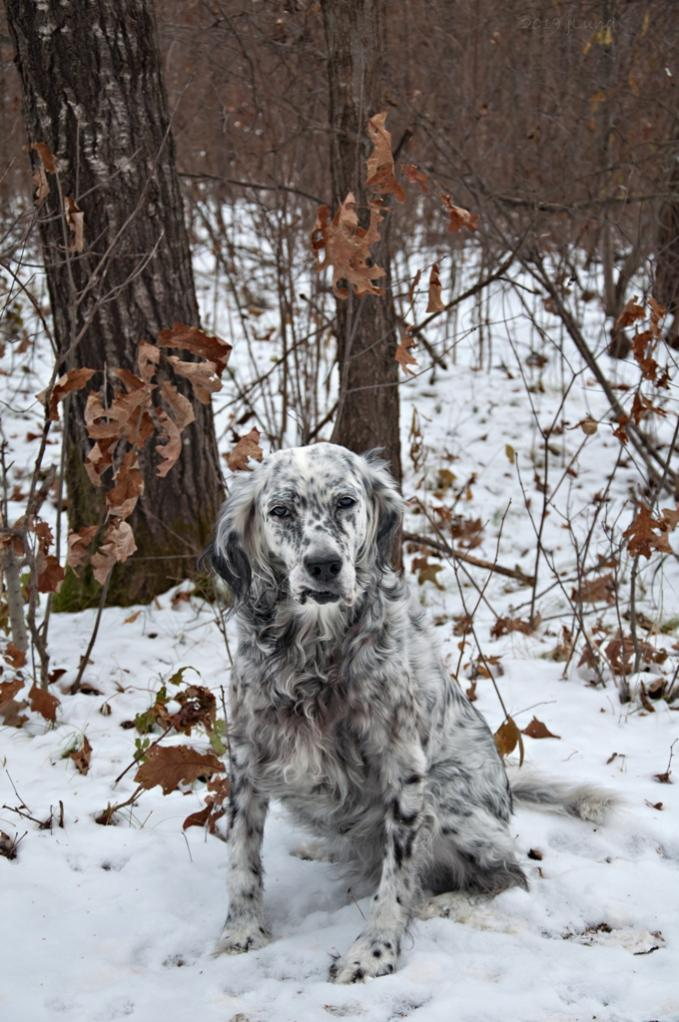 Name:  Grace awaiting a birthday treat at the Treat Tree 11-8-19.jpg Views: 64 Size:  118.4 KB