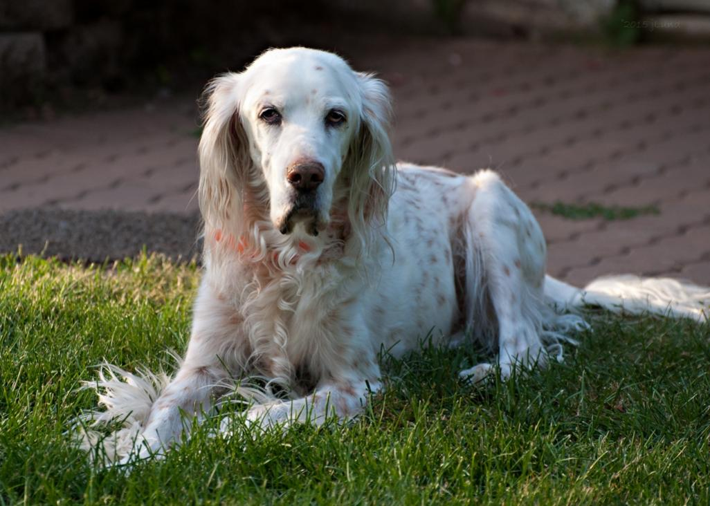 Name:  Ember in evening sun 8-1-15 B.jpg