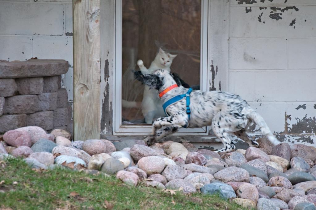 Name:  JD and Lili at the window 4-21-19 C.jpg