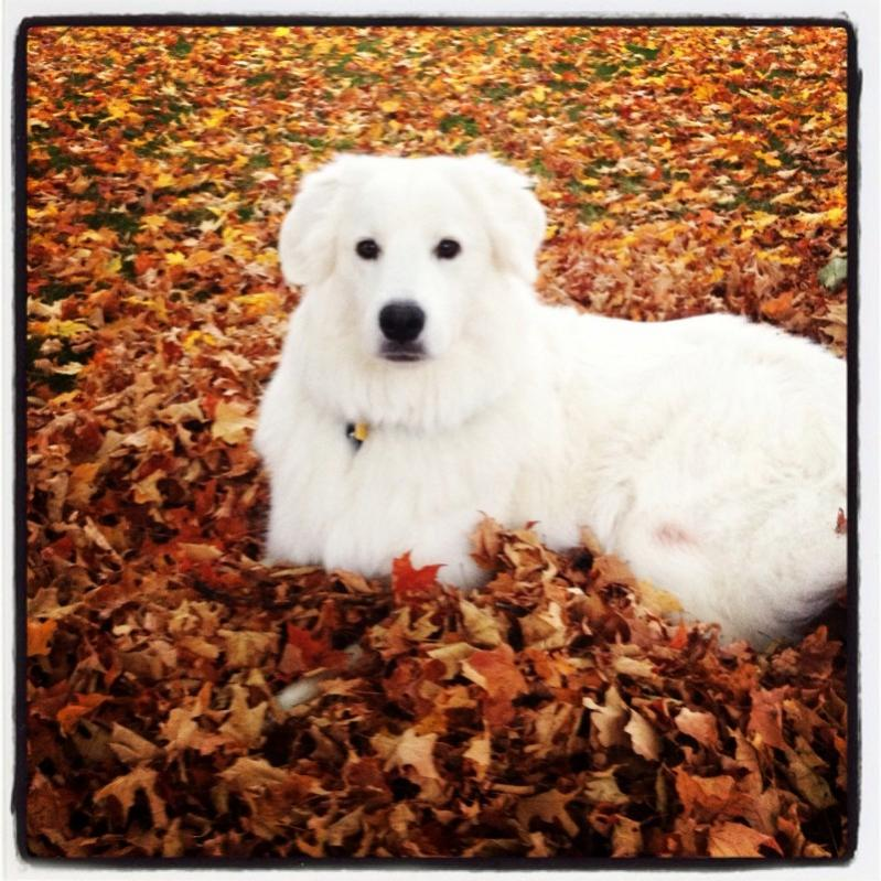 Name:  Layla in Leaves.jpg