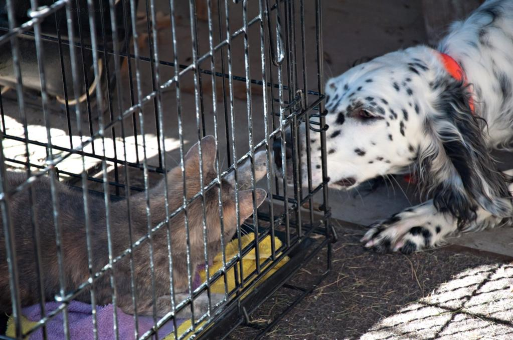 Name:  Lili and Dusty seem to like each other 8-30-19.jpg Views: 593 Size:  114.4 KB