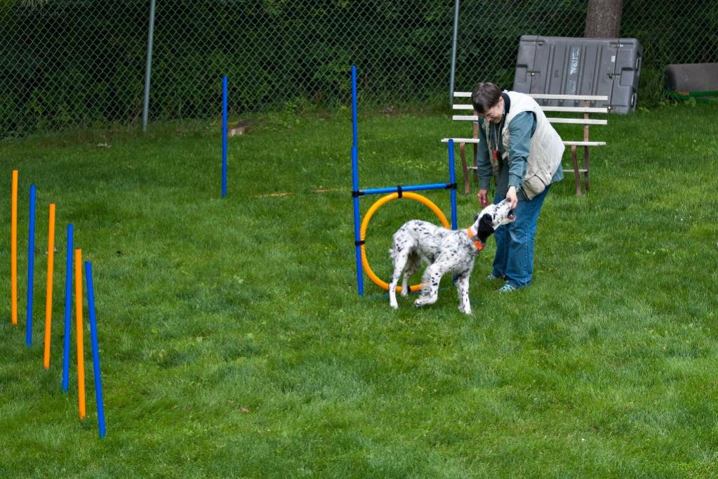 Name:  Through the hoop--Good girl, Lili! 8-10-19.jpg