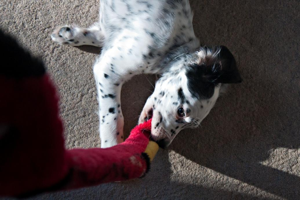 Name:  Lili playing Tug On Snake with mom 1-19-19.jpg