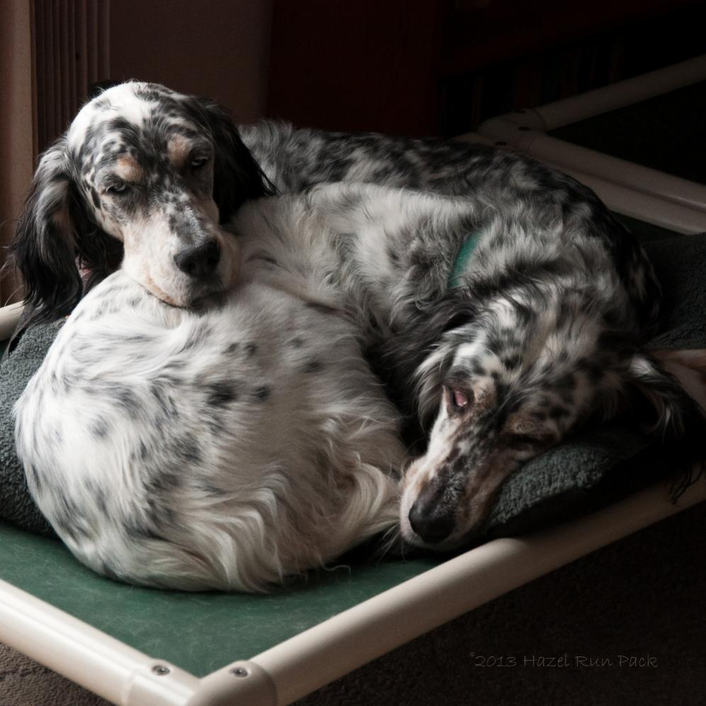 Name:  Cass and Ridge snuggling 12-23-13.jpg Views: 61 Size:  102.1 KB