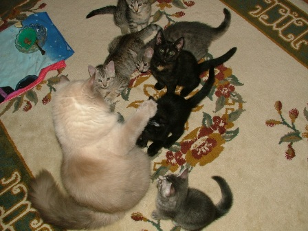 Name:  Jasper and kittens Oct 3 2007 e.jpg Views: 96 Size:  65.6 KB
