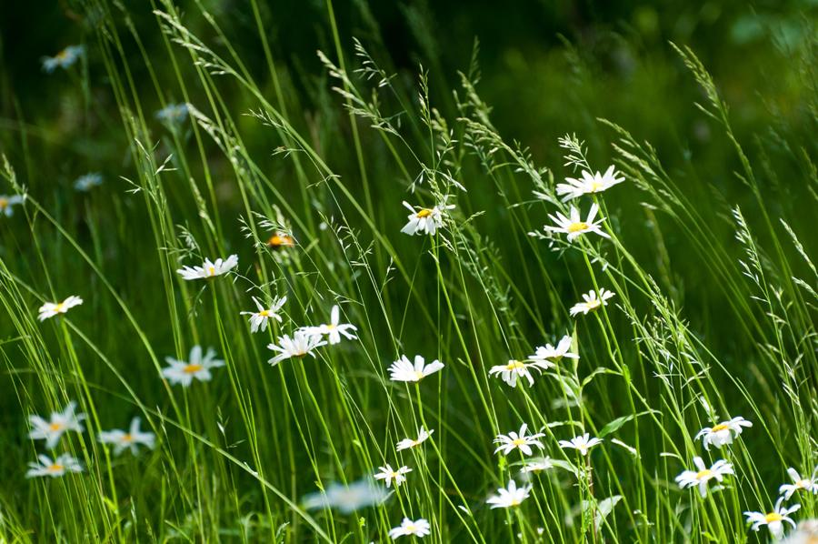 Name:  Front lawn 6-17-11 F.jpg Views: 524 Size:  115.1 KB