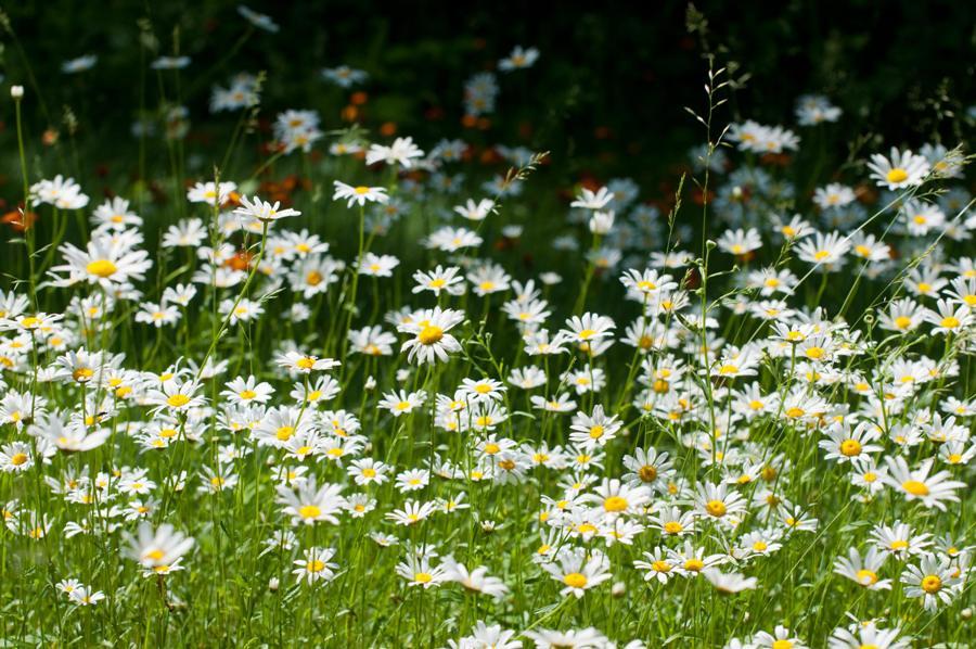 Name:  Front lawn 6-17-11 B.jpg Views: 520 Size:  129.6 KB