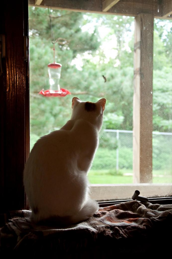 Name:  The ultimate cat entertainment center 7-27-16.jpg Views: 100 Size:  70.1 KB