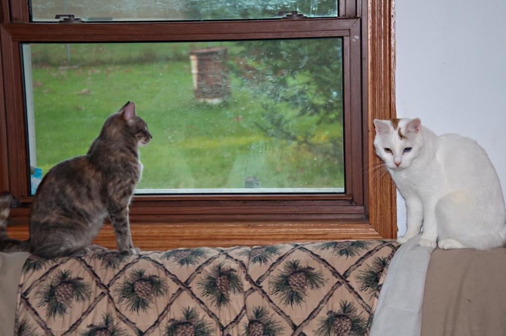 Name:  Kittles on the loveseat 9-19-19.jpg Views: 370 Size:  89.6 KB