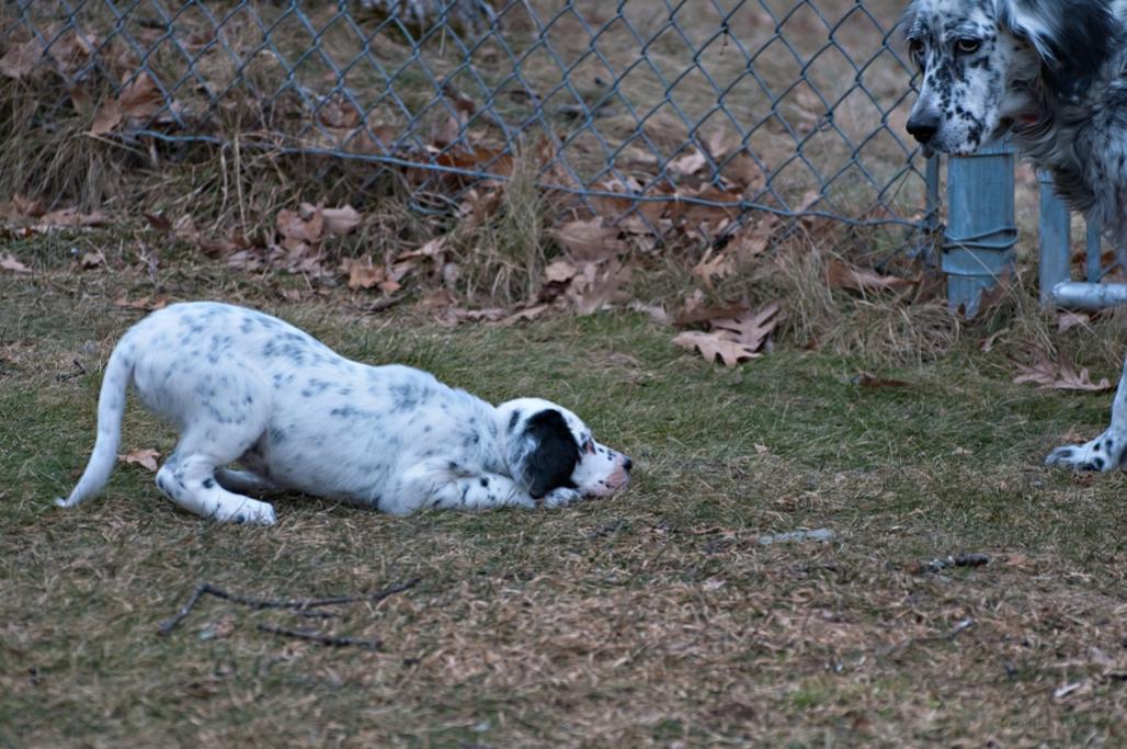 Name:  Play with me, pleeeeeeese, Grace! 1-12-19.jpg Views: 779 Size:  130.6 KB