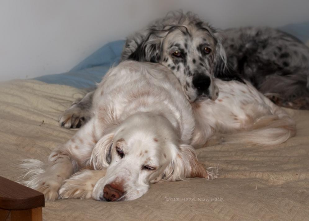 Name:  Snoozing Ember, watchful Cole 5-15-13.jpg Views: 285 Size:  62.8 KB