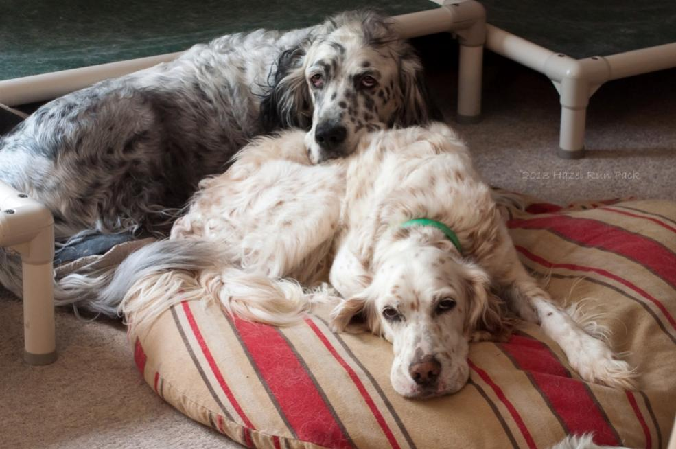 Name:  Snoozing Cole and Macie 7-22-13.jpg Views: 280 Size:  84.1 KB