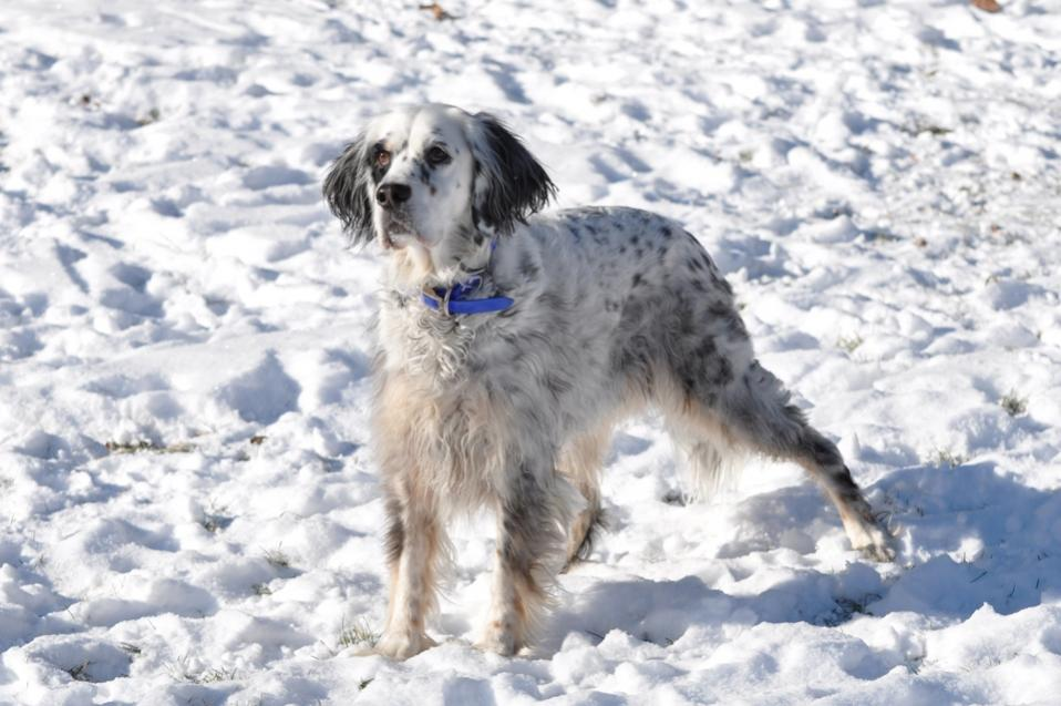 Name:  Belle waiting for snowballs 12-8-10 A.jpg Views: 44 Size:  84.8 KB