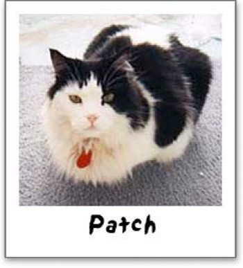 Patch A.K.A. Babooner